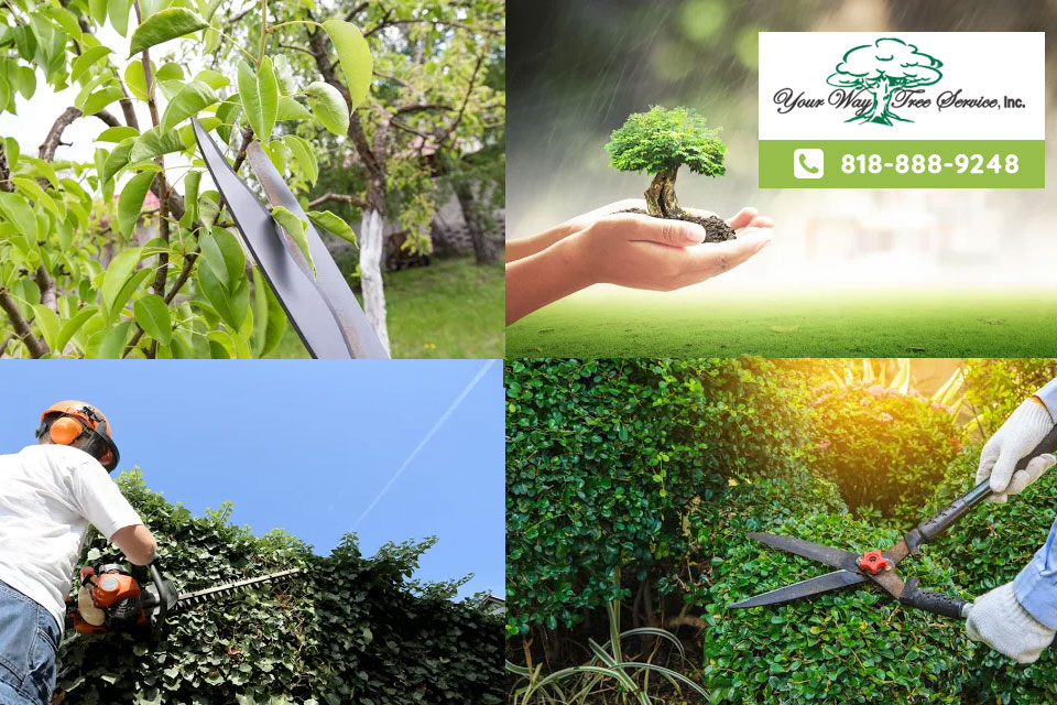 Take Care Of Garden With Our Tree Service In Valley Village