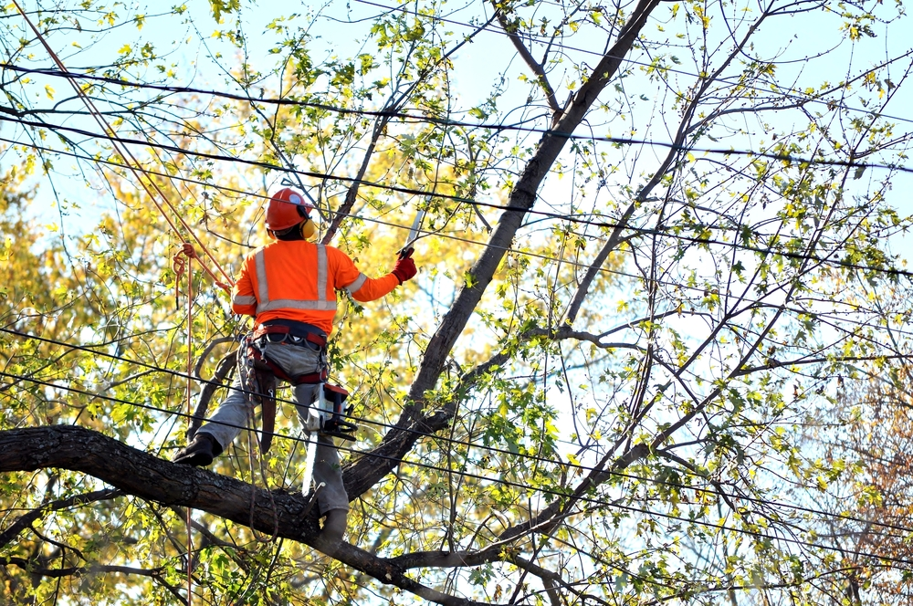 a tree trimming service in Calabasas
