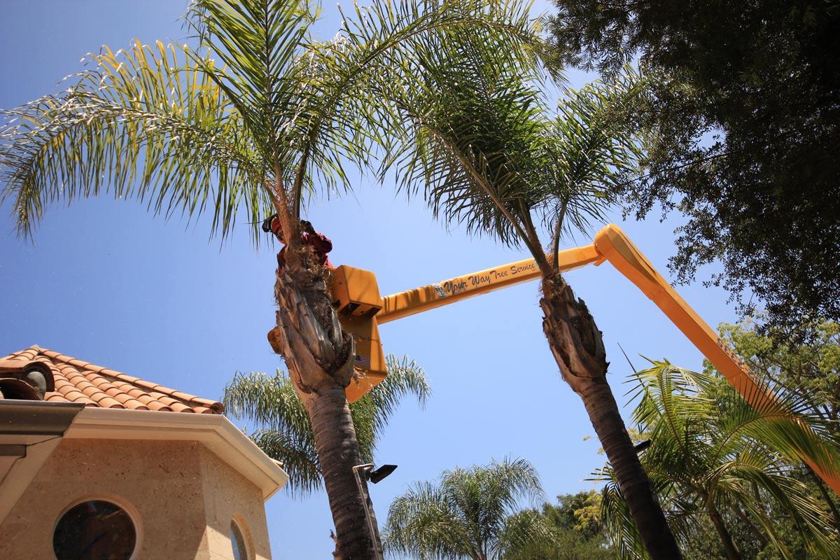 tree service dying tree