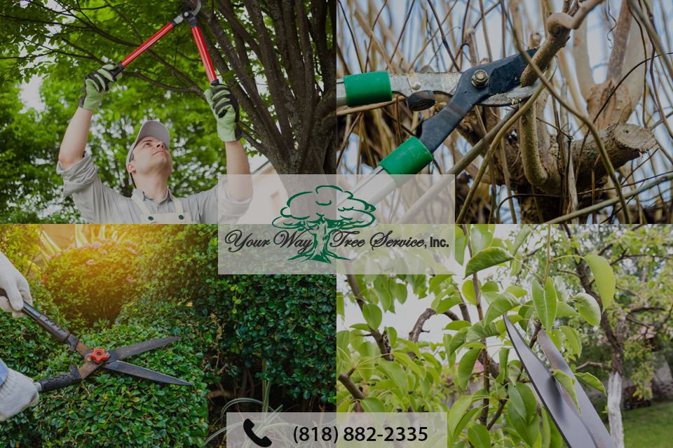 enhance-your-garden-with-professional-tree-trimming-in-van-nuys