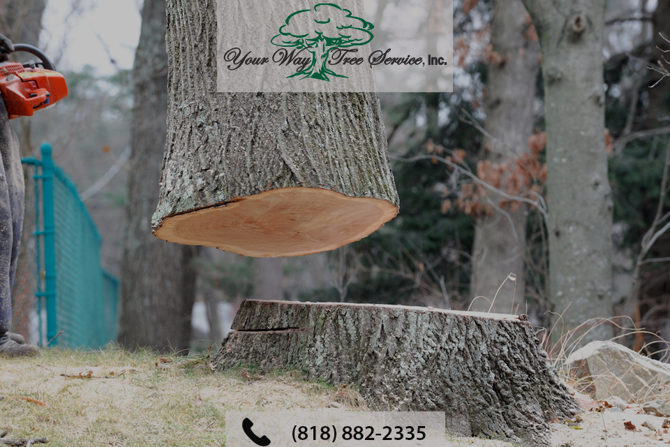 Get Expert Help with Tree Removal in Brentwood