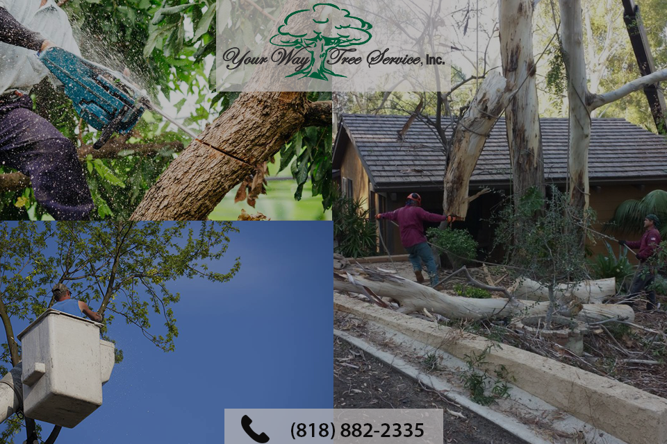 tree-removal-beverly-hills-1