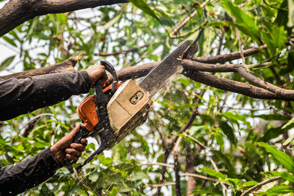 Tree Service in Beverly Hills