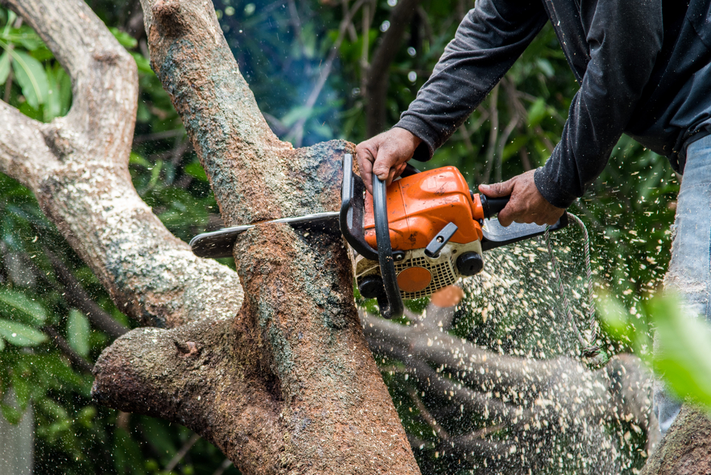 tree service specialists in augora hills