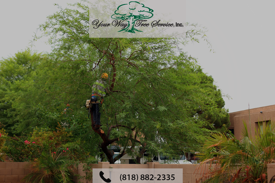 Why You Need Professional Tree Trimming in Los Angeles