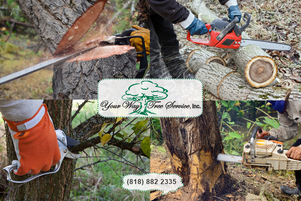 Emergency Tree Removal in Agoura Hills