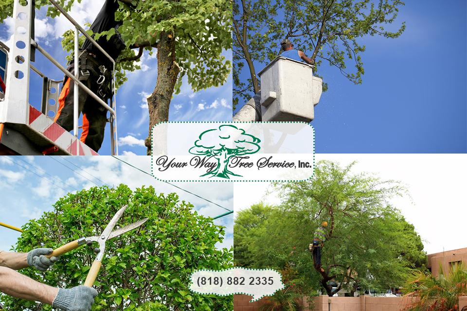 Tree Trimming in Reseda Serves Several Purposes