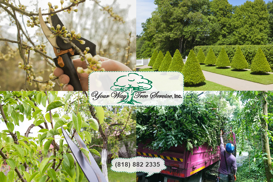 tree service in Sherman Oaks