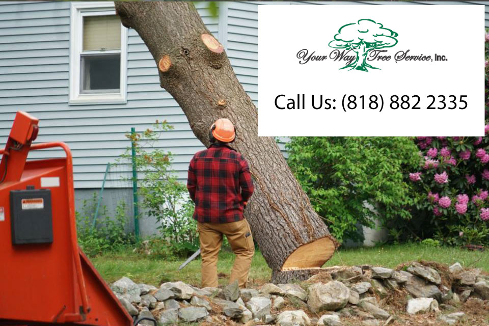 handle-those-oversized-trees