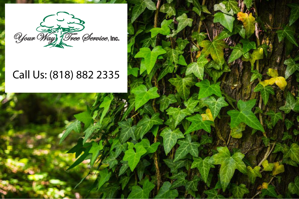 quality-tree-service-in-calabasas