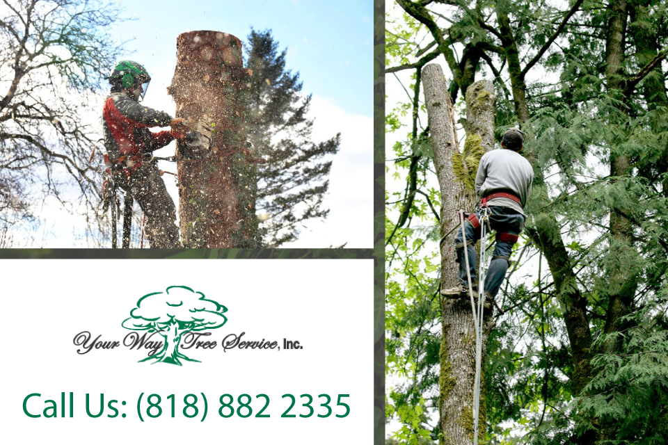 tree-trimming-in-bel-air