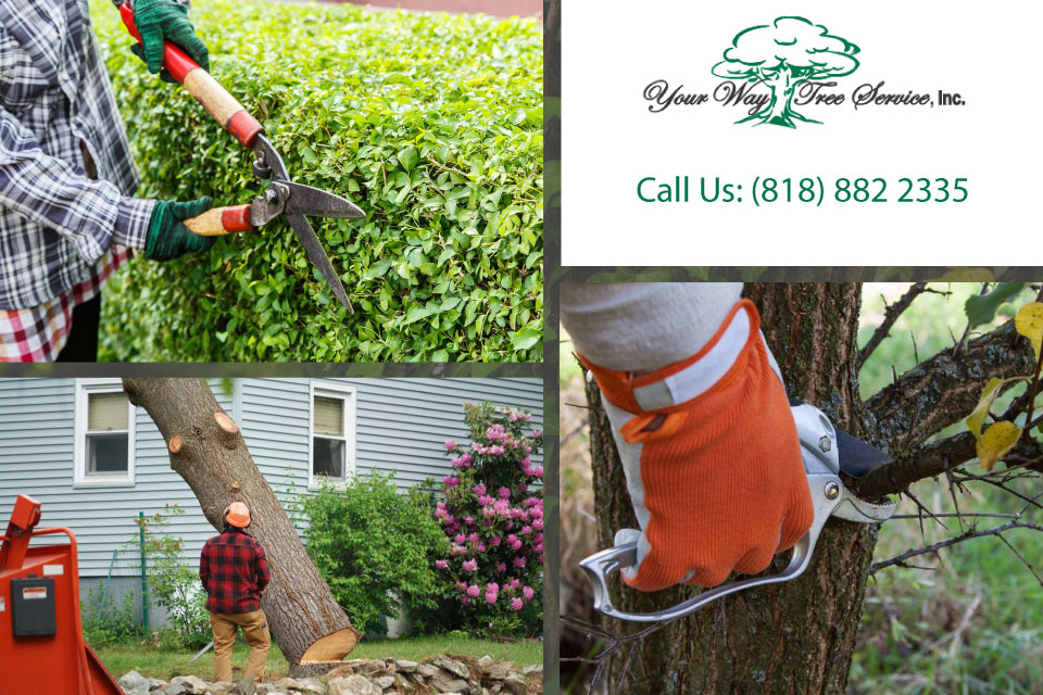 Avoiding the Dangers of Tree Trimming in Brentwood