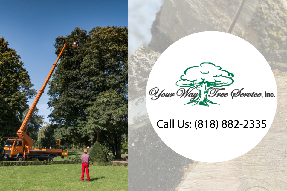 how-is-palm-tree-removal