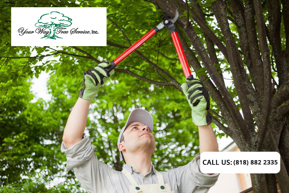 Professional Pruning and Why Your Garden Needs it