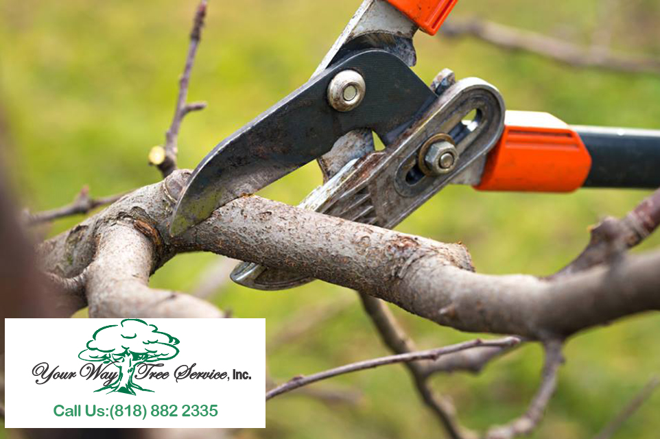 Good Reasons for Tree Pruning