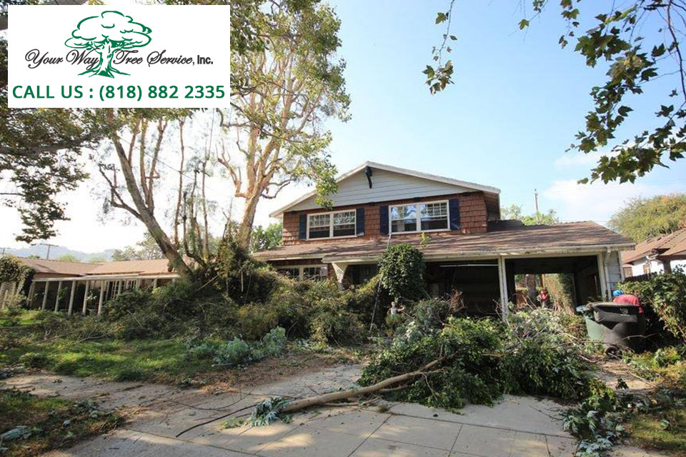 How to Lower Your Risk of Tree Damage during Storm Season?
