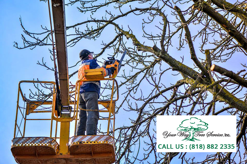 Enhance Your Garden With Our Professional Tree Service In Encino