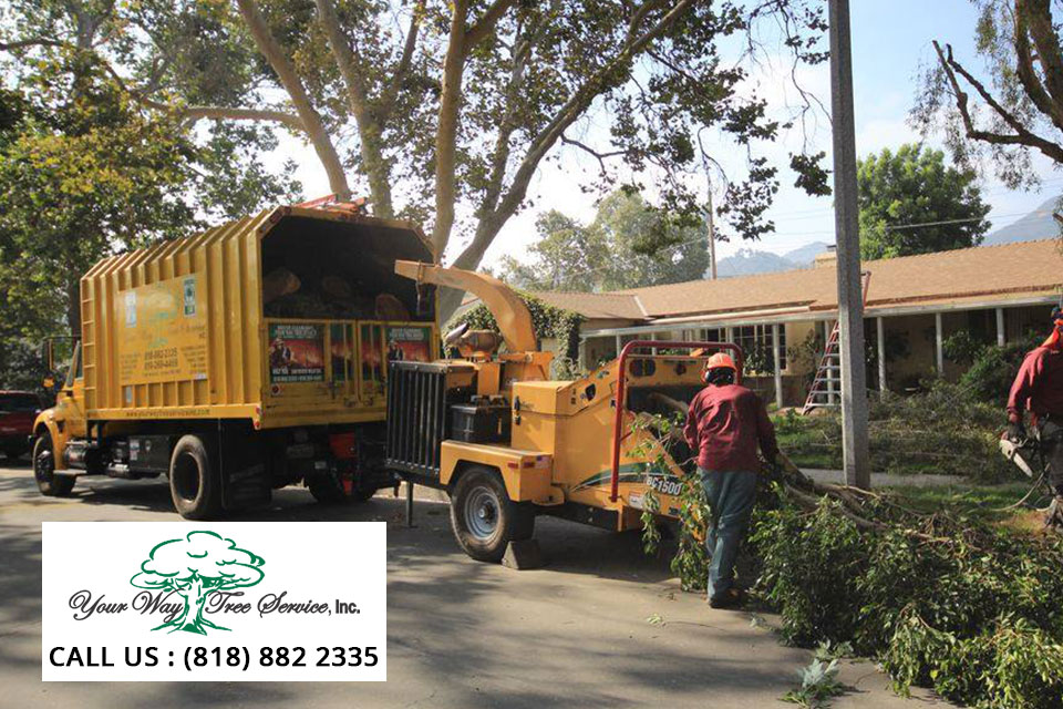 tree-removal-service-in-van-nuys