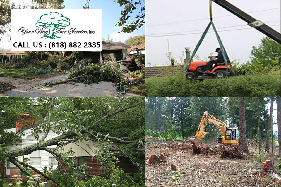 tree-removal-service-in-van-nuys2