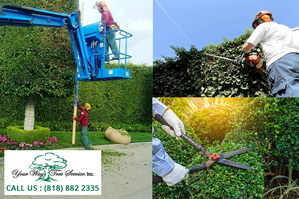 Contain Valuable Trees With A Tree Trimming Service In Valley Village