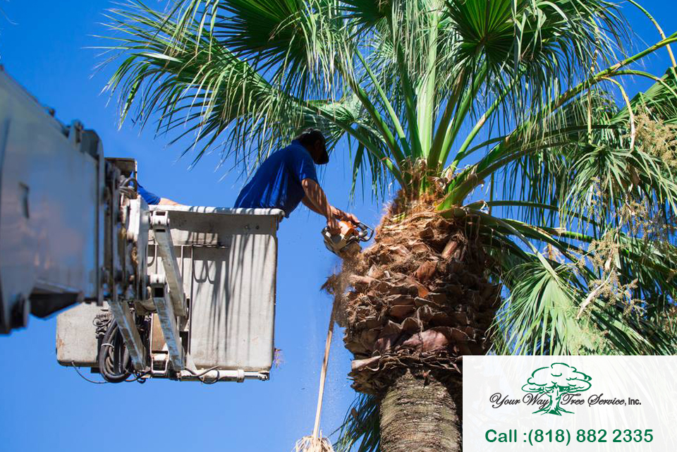 Our Palm Tree Removal service