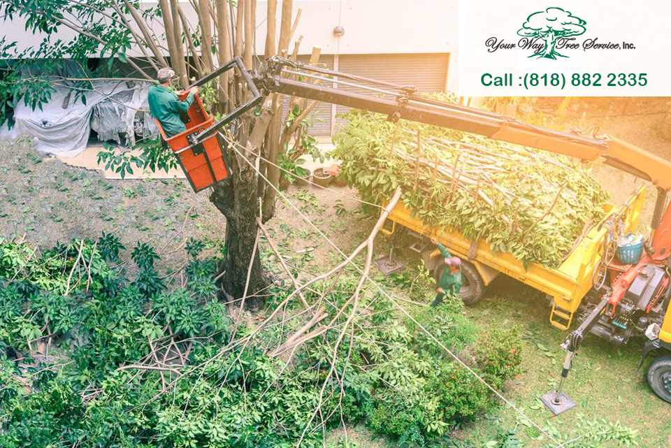 A Residential Tree Service