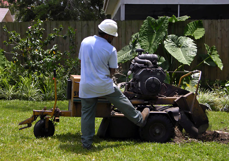 Tree Removal and Stump Grinding Service
