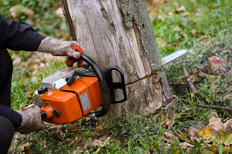 Tree Removal and Stump Grinding Service on Signs of Dying or Sick Tree
