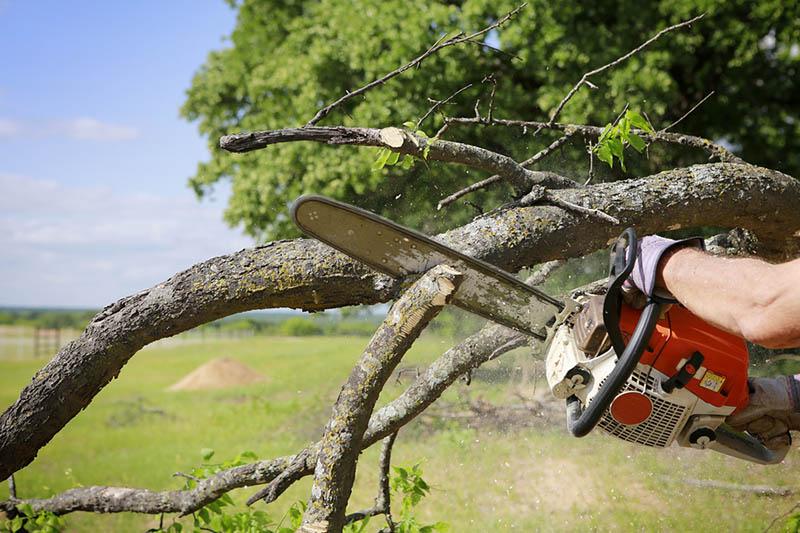 Tree removal Sherman Oaks service
