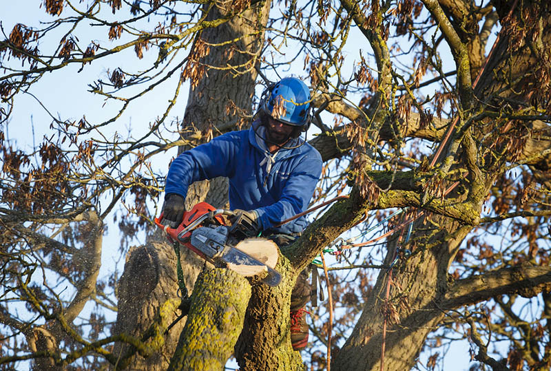 Image result for about tree and shrub removal cost ,