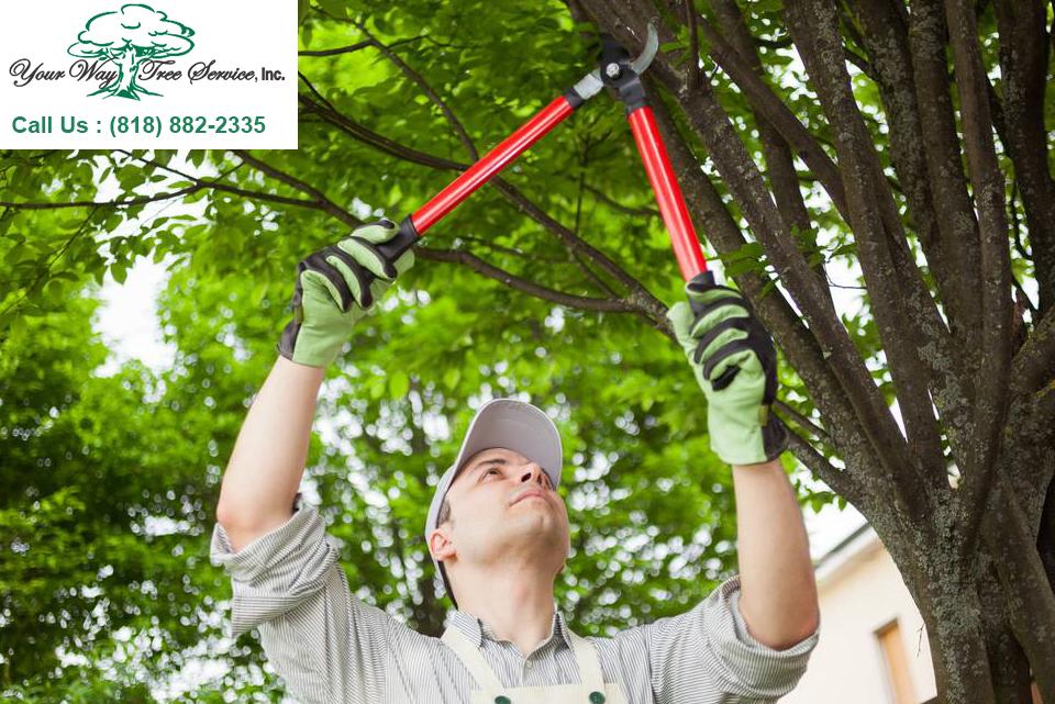 Tree Removal in Sherman Oaks