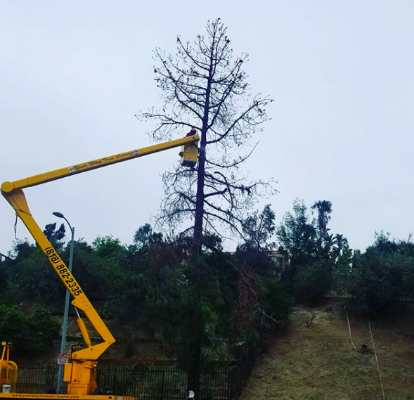 Tree Removal In Northridge
