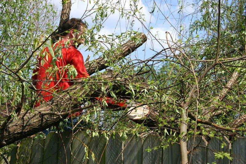Tree removal Northridge