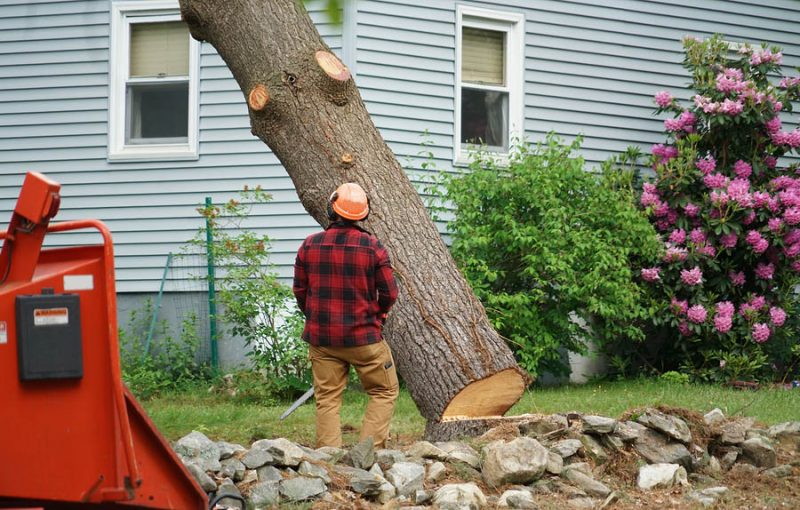 licensed and bonded tree removal