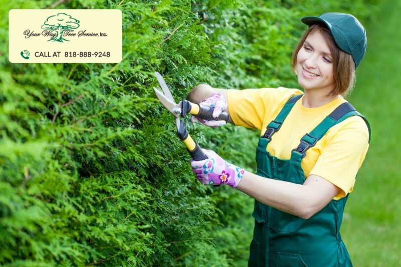 tree trimming service in Los Angeles