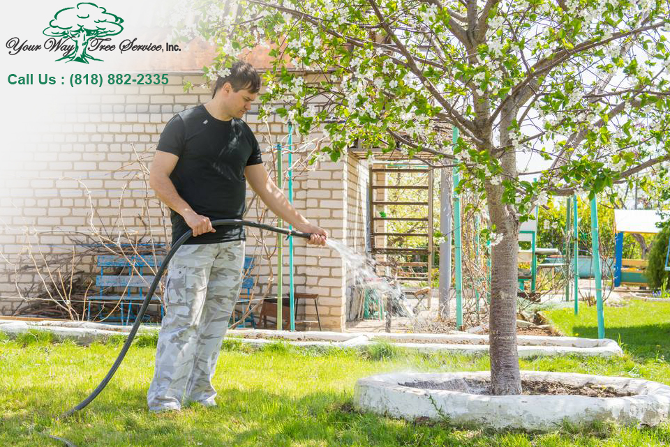 Tree Services in Los Angeles
