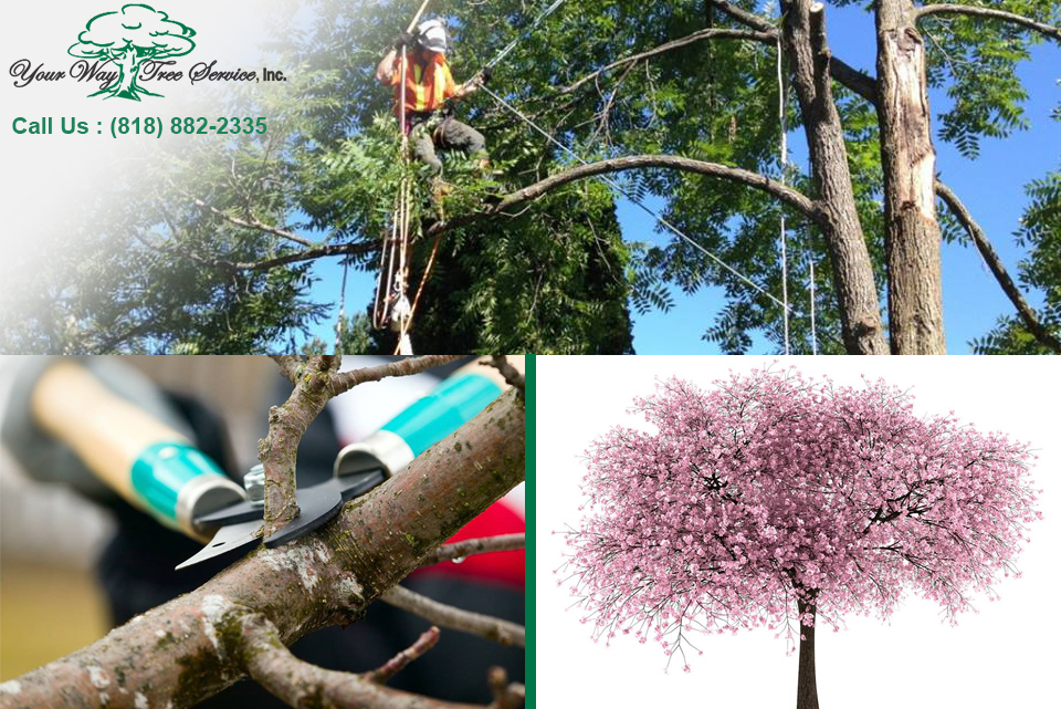Tree Trimming Services in Los Angeles