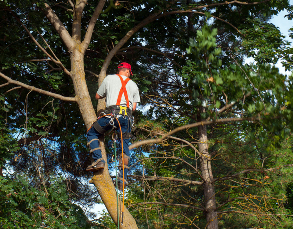 residential tree trimming