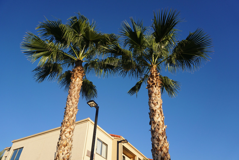 best palm tree removal