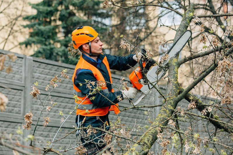 residential tree trimming service