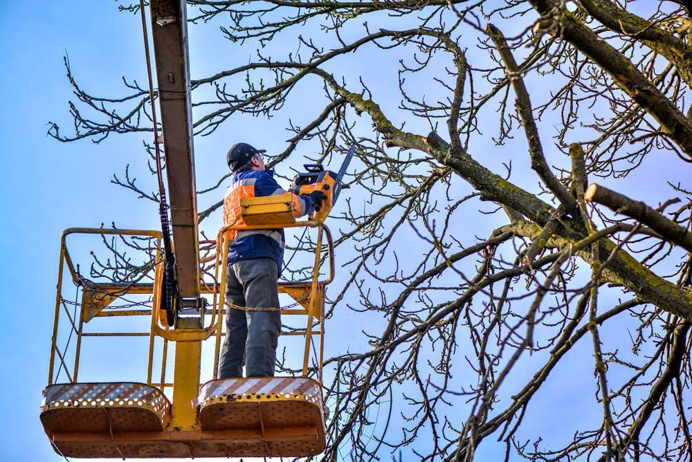 tree trimming in Santa Barbara