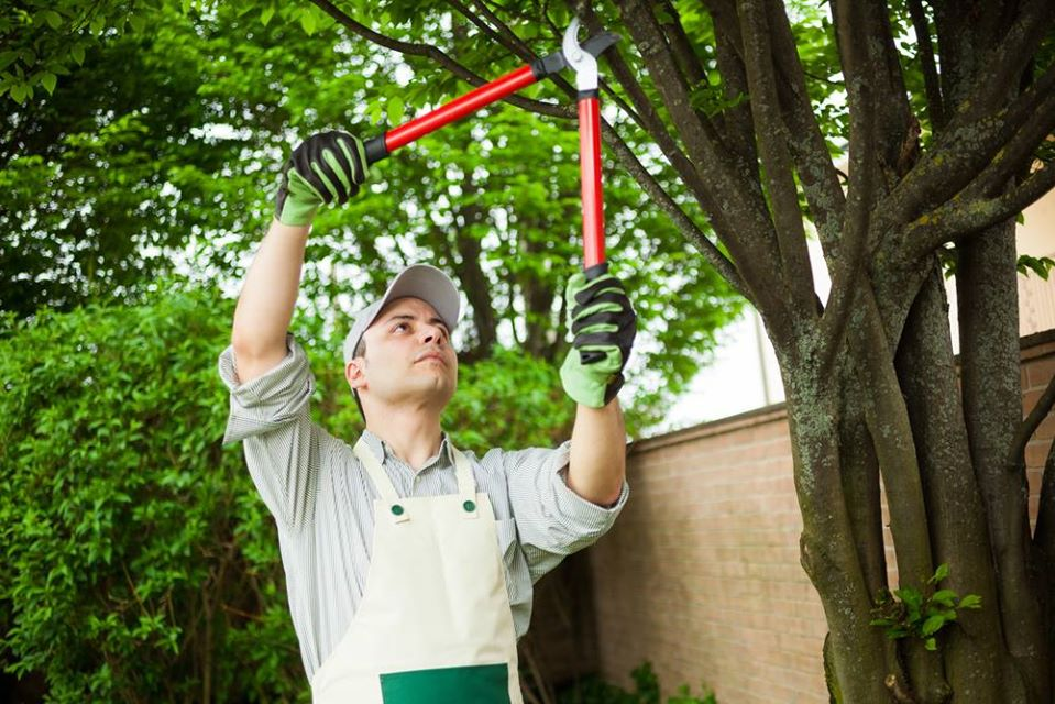 tree trimming in Valley Village