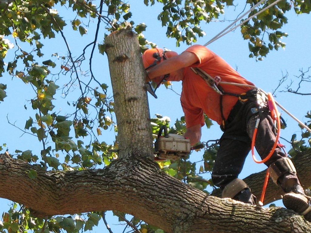 commercial tree trimming