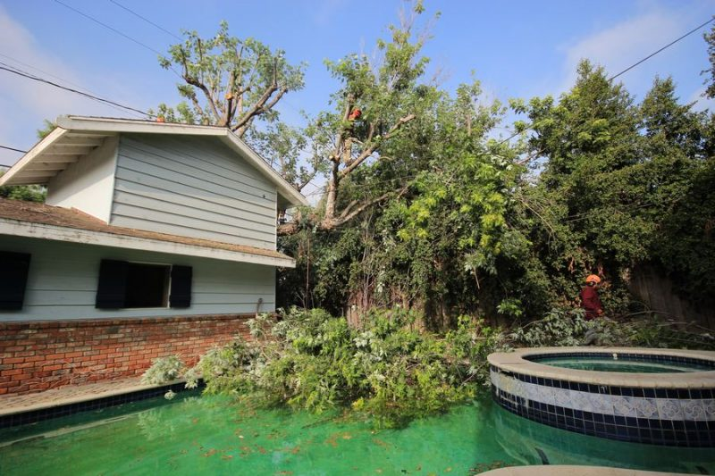 Tree Brush Removal Service
