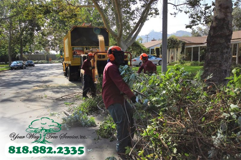 Tree Brush Removal Service