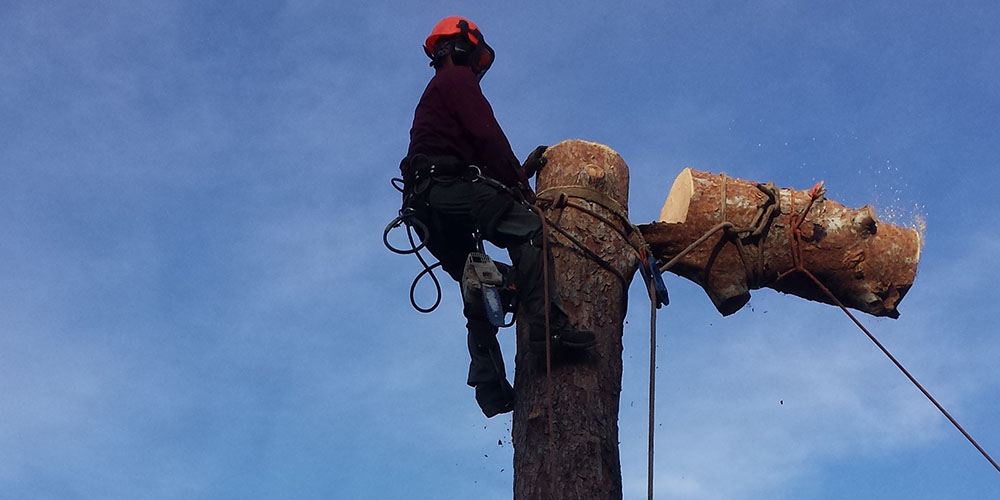 Tree Removal & Tree Trimming Service Los Angeles